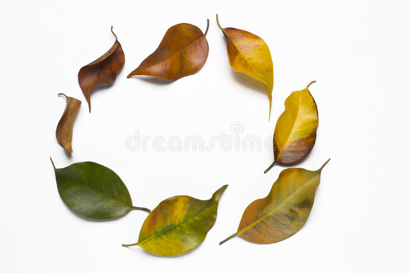 Life cycle. Beginning and end of a tree leaf the life cycle royalty free stock photos