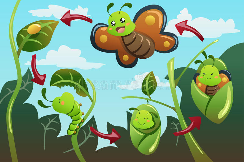 Life cycle of the butterfly. A vector illustration of life cycle of the butterfly stock illustration