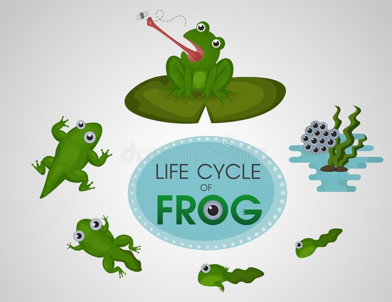 Life cycle of frog. Vector Illustration royalty free illustration