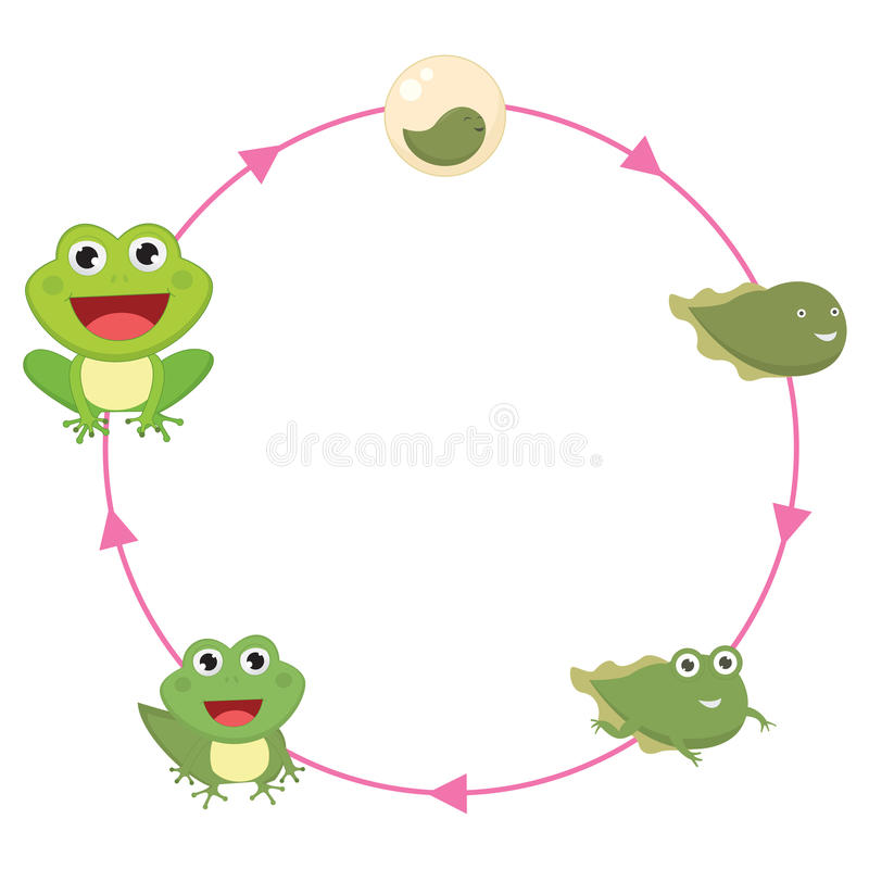 The Life Cycle Of Frog Vector Illustration royalty free illustration