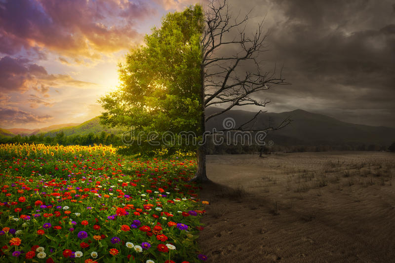 Life and death. Beautiful colorful landscape transforms to desert with no color