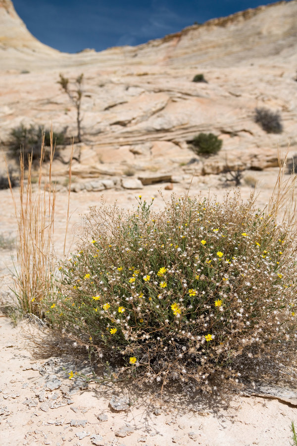 Life on the desert royalty free stock photography