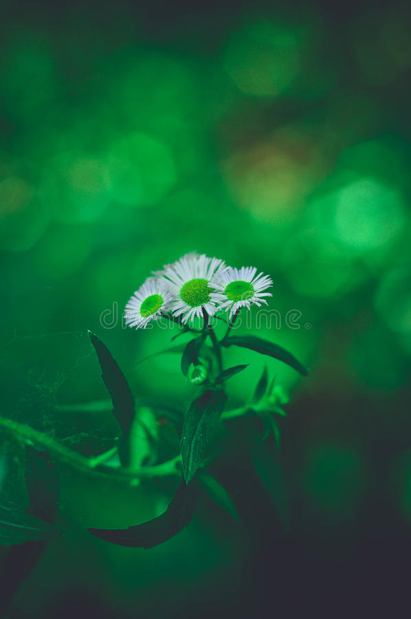 Life of flower royalty free stock images