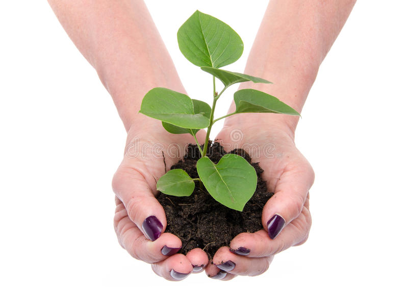 Life and growth concept with human hands holding a green small p royalty free stock photography