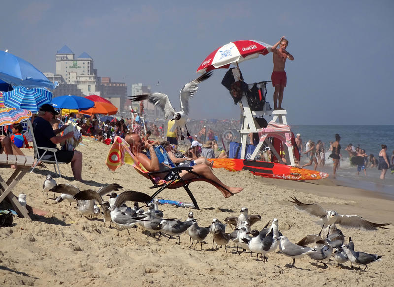 Life Guard and Seagulls. Photo of life guard and seagulls at the beach in ocean city maryland on 8/17/16. Record heat had many people flocking to the seashore to stock photos