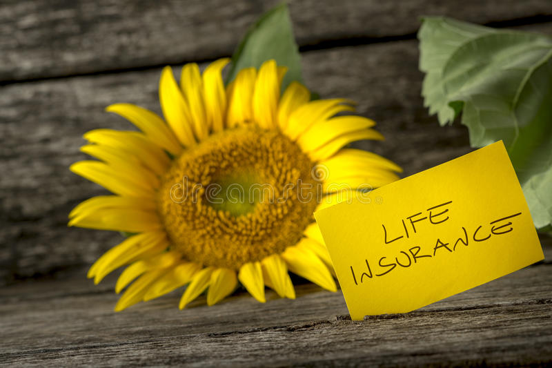 Life insurance concept with a colorful sunflower. Life insurance concept with a colorful bright yellow Helianthus sunflower on a wooden bench with a handwritten royalty free stock photo