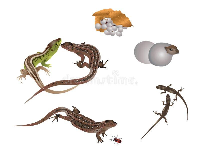 Life of lizard royalty free illustration