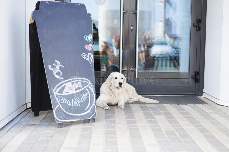 Life in a modern city - a big beautiful dog near a pets-friendly cafe stock photo