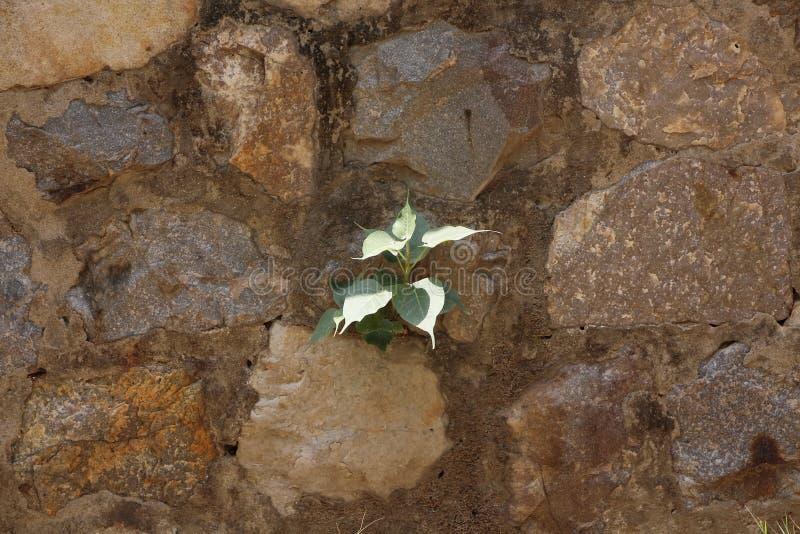 Green plant in hard rocks royalty free stock photos