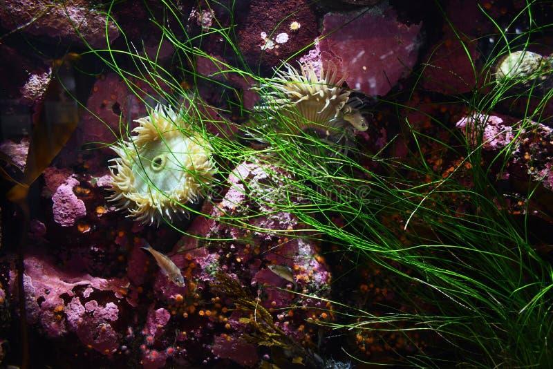 Life on ocean floor stock photography
