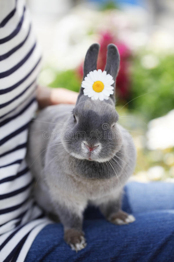 Download Life with pets stock photo. Image of bunny, mammal, pretty - 33369692