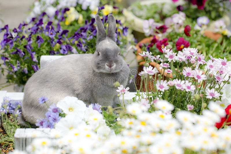 Life with pets. Taken in a garden pet rabbit stock photography