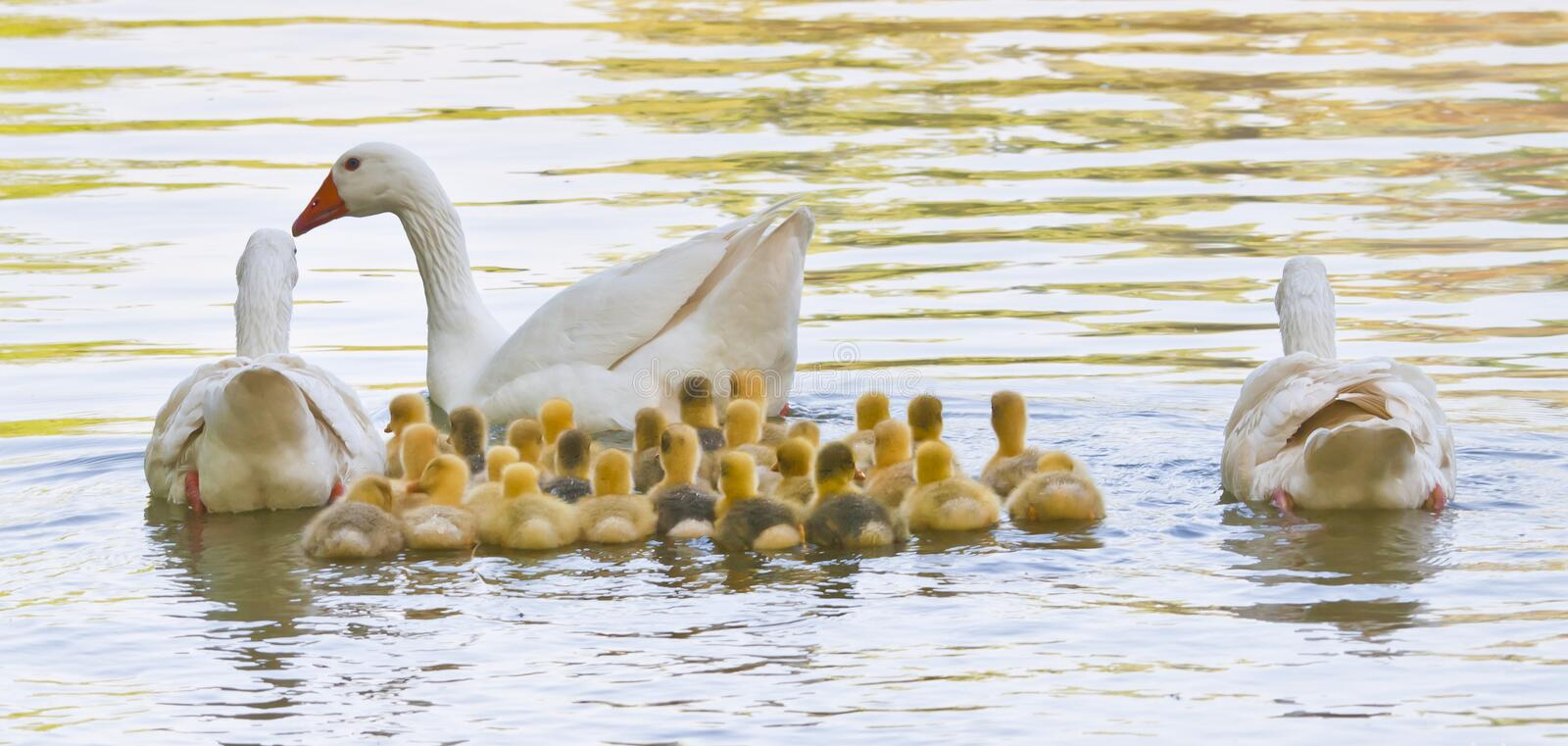 Download Life in the pond stock photo. Image of ecological, green - 25422554
