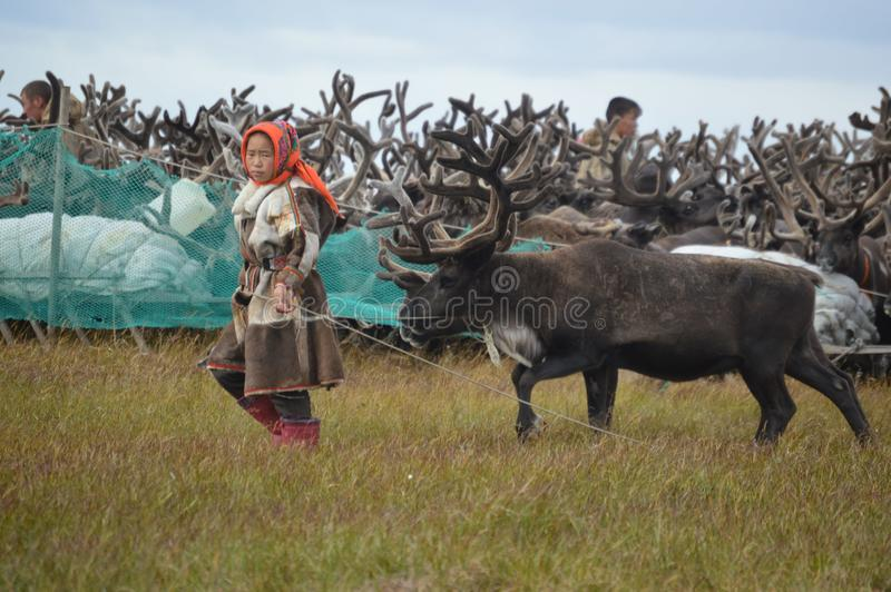 The life of reindeer herders on the Yamal Peninsula royalty free stock photography