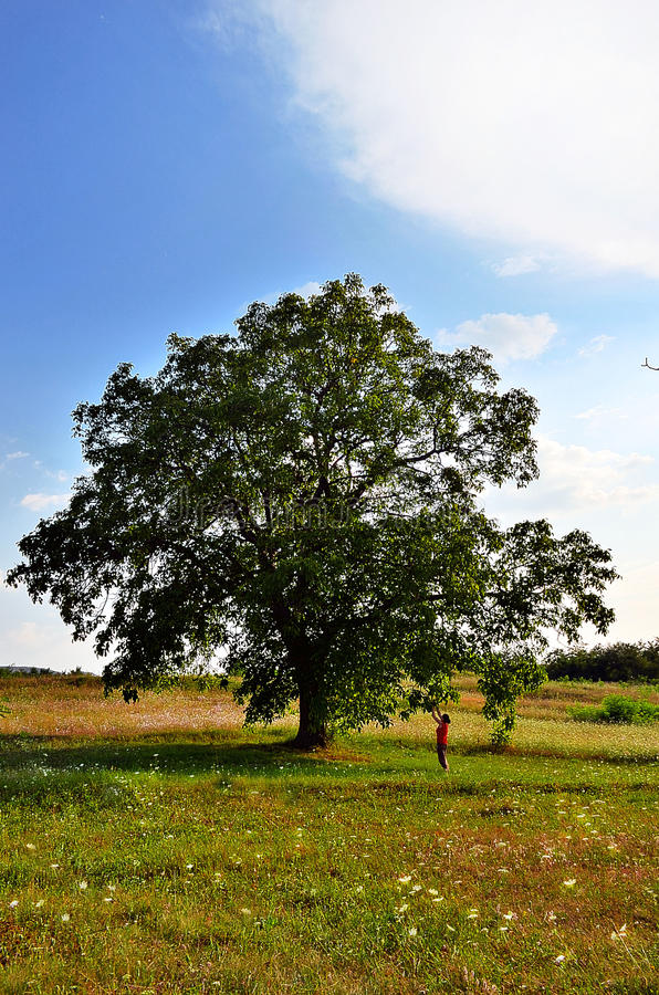 Life tree stock images