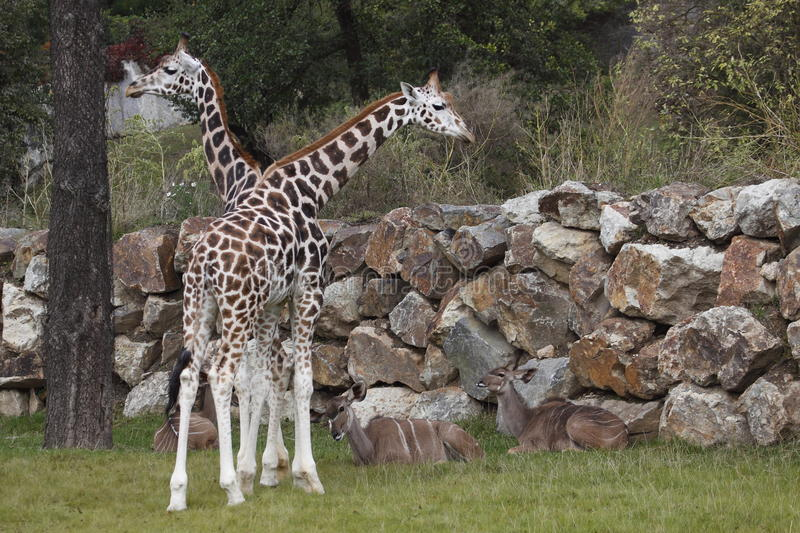 Download Life In Zoo Royalty Free Stock Photos - Image: 16426898