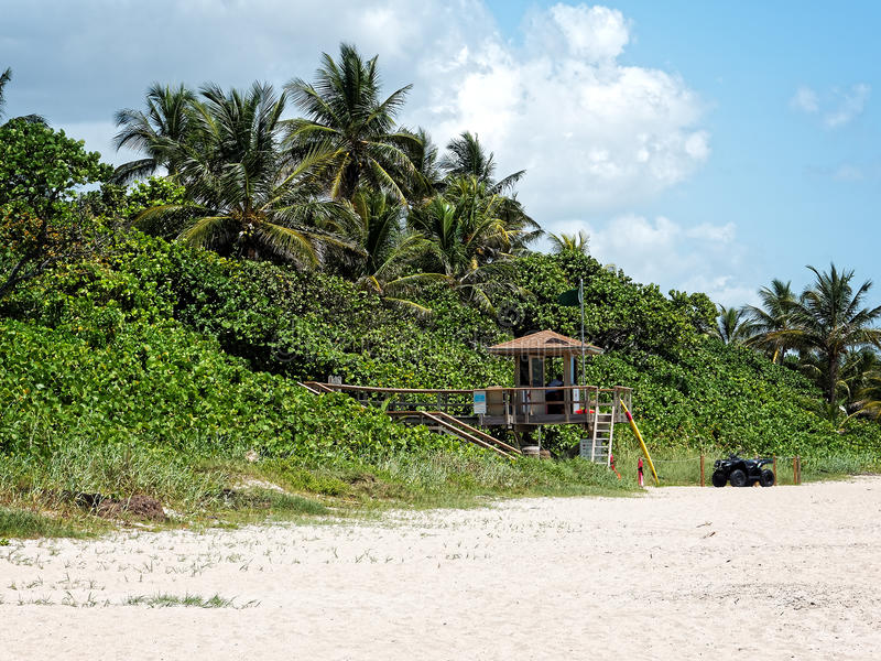 Lifeguard Post South Florida Beach. Occupied lifeguard post surrounded by Palm Trees and green foliage on South Florida beach stock image