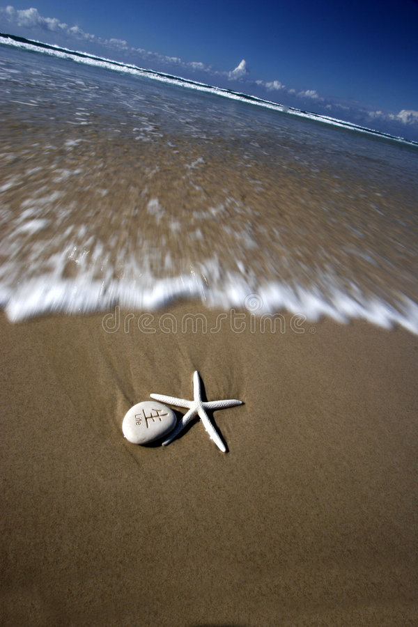 Lifes a Blurr. Starfish and life stone on shore line royalty free stock images
