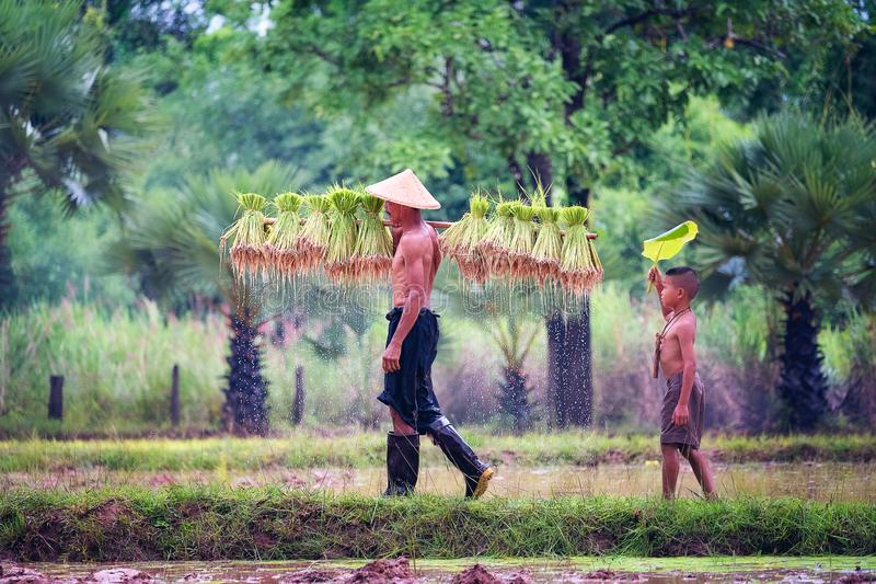 Lifestyle of Southeast Asian people in the field countryside Thailand ,Farther and son in rice fields after work and so happy. stock photos