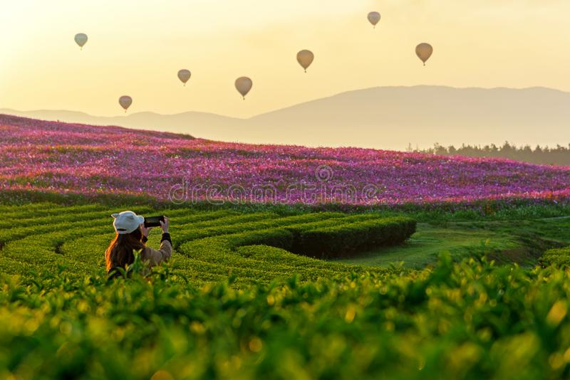 Lifestyle traveler women take a photo fire balloon on the nature tea and cosmos farm in the sunrise royalty free stock photography