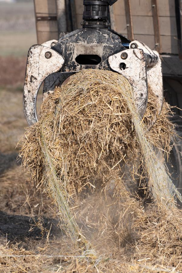 Lifting a bundle of dry straw with forestry grapple. Closeup of bundle of dry straw for ground cover being lifted by forestry grapple. Agriculture, farming stock images