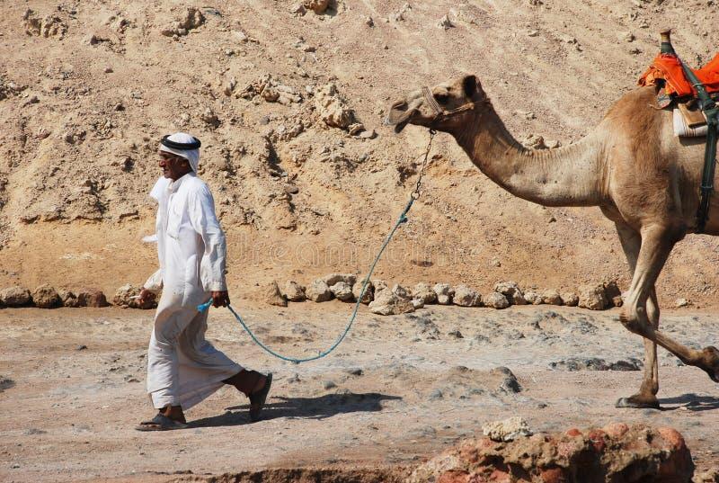 Ligação beduína do homem seu camelo aos turistas imagens de stock