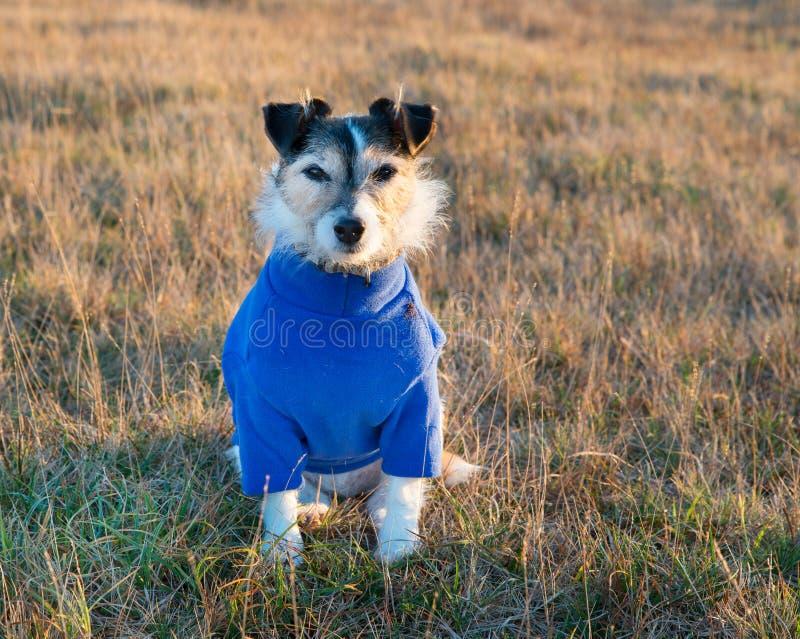 Ligação em ponte vestindo do cão fotografia de stock royalty free