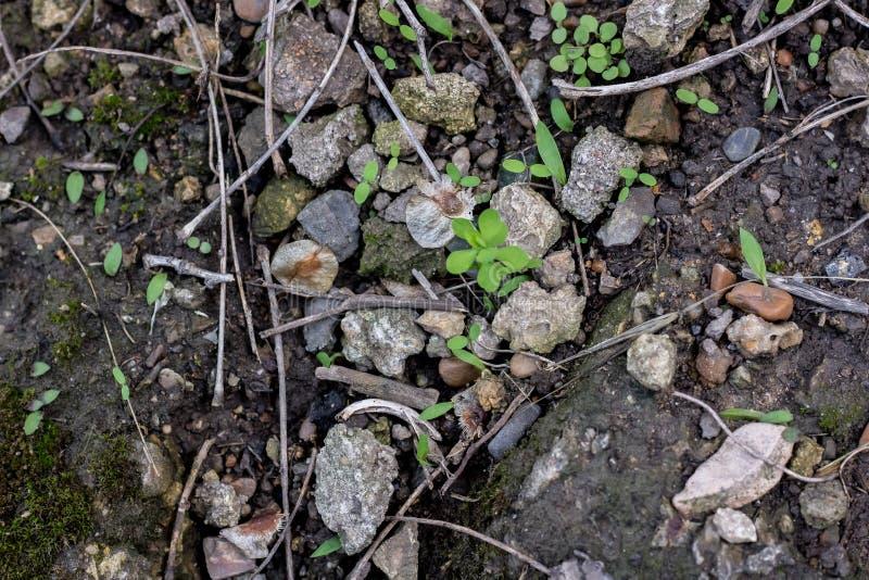 Ligeramente las hierbas que crecen en piedras fotos de archivo libres de regalías