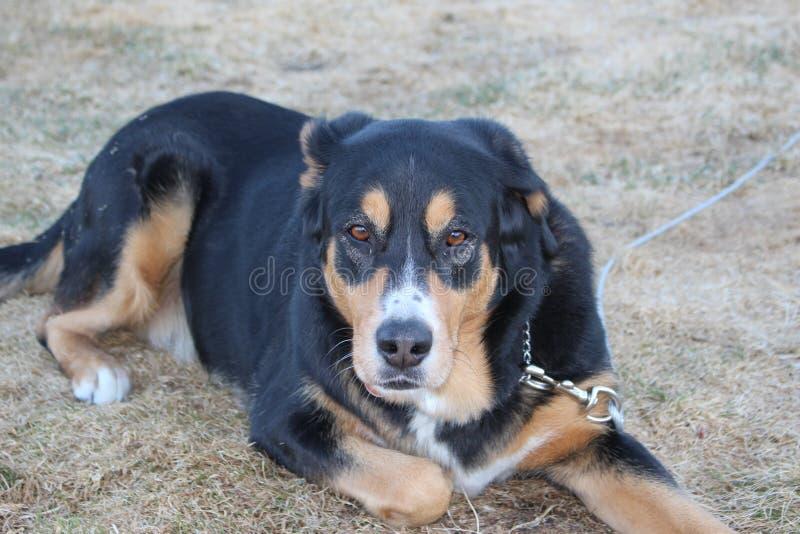 Ligga för hund royaltyfri foto