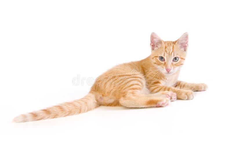 ligga för katt arkivbild
