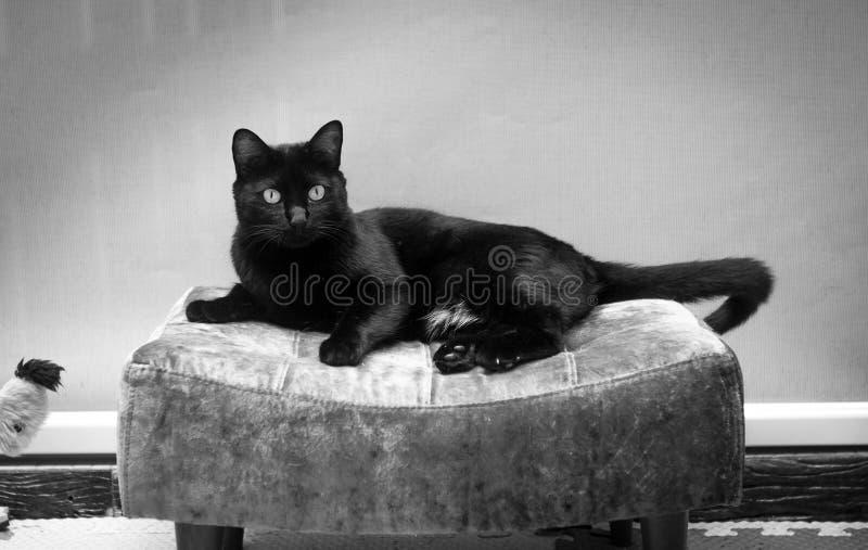 Ligga för svart katt arkivbilder