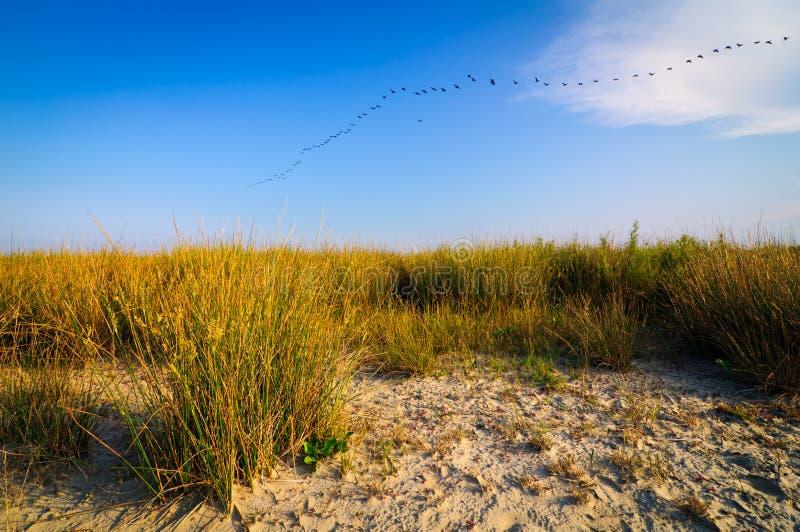 liggande för stranddanube delta arkivfoton