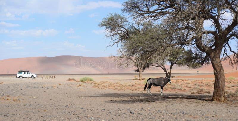 liggande namibian royaltyfri bild