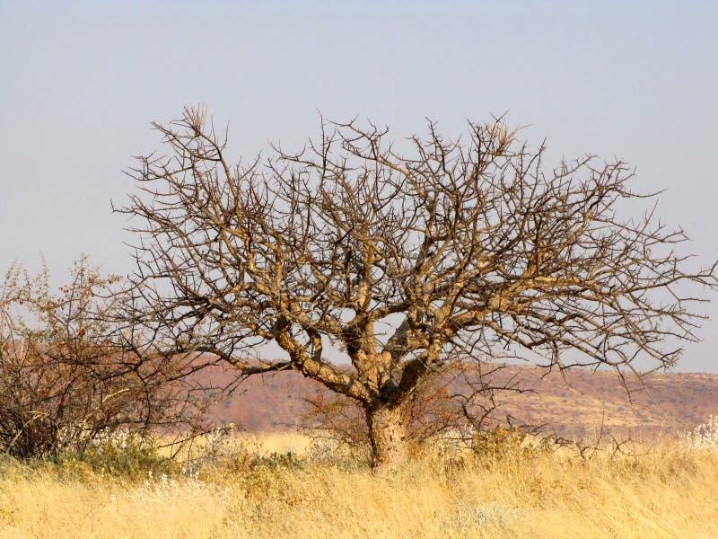 liggande namibian royaltyfri foto