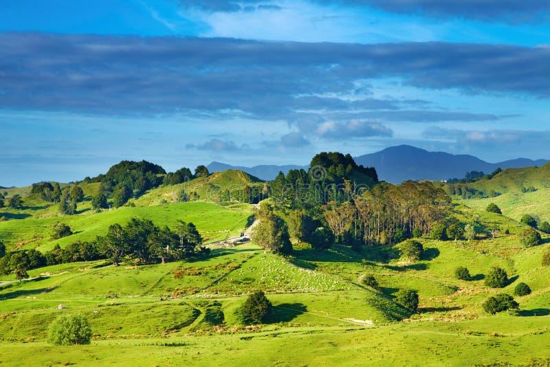 liggande New Zealand royaltyfri foto