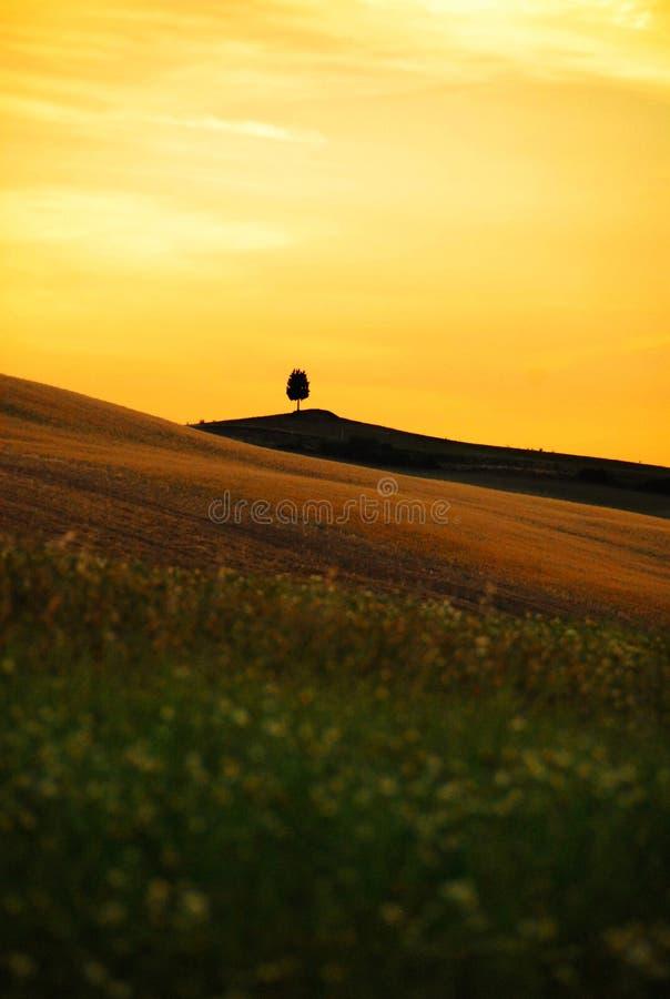 Download Liggande tuscany fotografering för bildbyråer. Bild av fält - 19784719