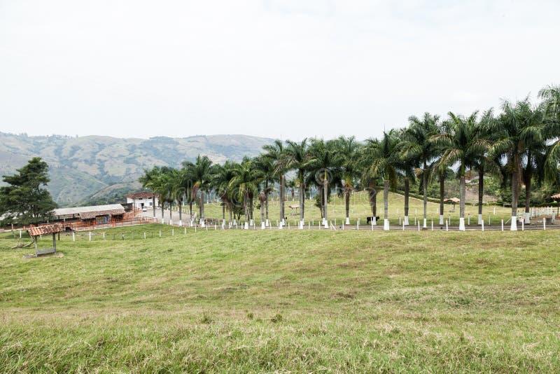Liggande. Vackra ögon på den colombianska hacienda med en bana omgiven av palmer royaltyfria foton