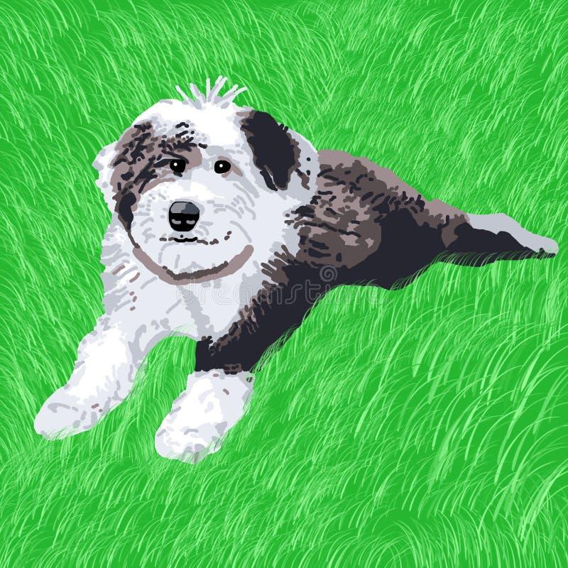 liggande valpsheepdog för gräs royaltyfri bild