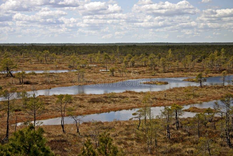 Download Liggandehed arkivfoto. Bild av marsklan, marsh, tree, fall - 515368