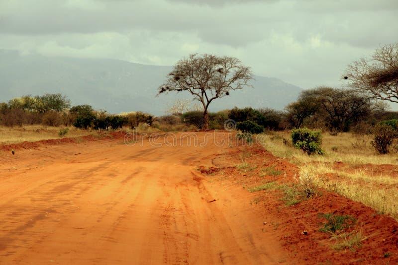 liggandesafari royaltyfri fotografi