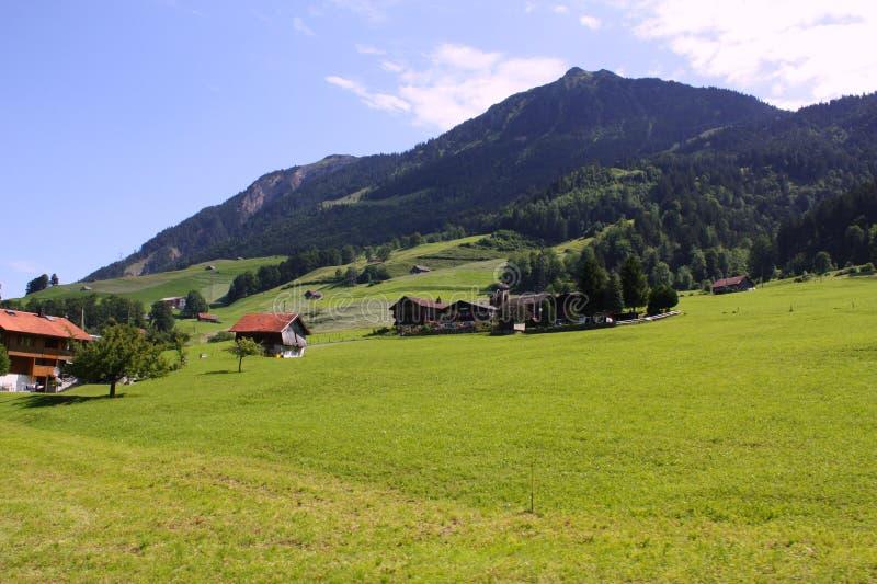 liggandeschweizare royaltyfria foton