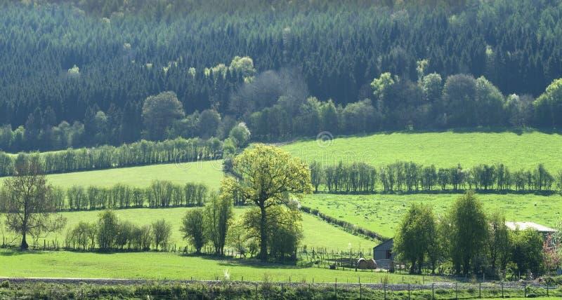 liggandeskogsmark royaltyfri bild