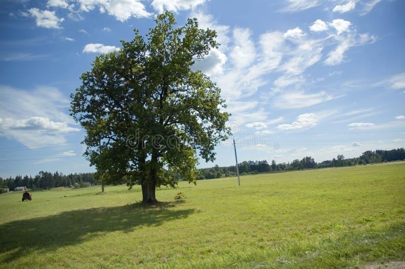 Download Liggandesommar arkivfoto. Bild av miljö, green, ensamt - 981938