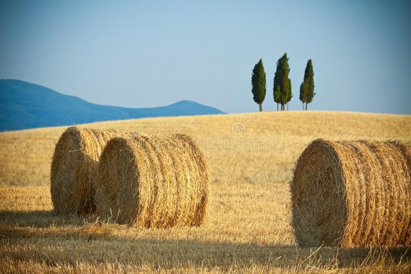 liggandesommar tuscany arkivbilder