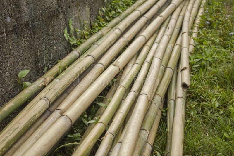 Liggen de lange boomstammen van droge grijze groene bamboestelen op het gras dichtbij de concrete muur royalty-vrije stock foto's
