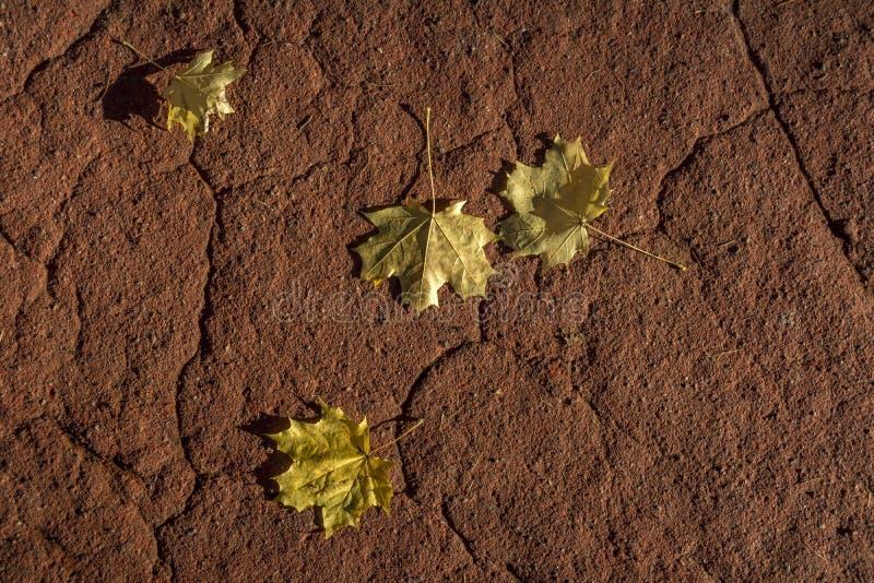 Ligger gula lönnlöv för höst på den röda golvbeläggningen royaltyfri fotografi
