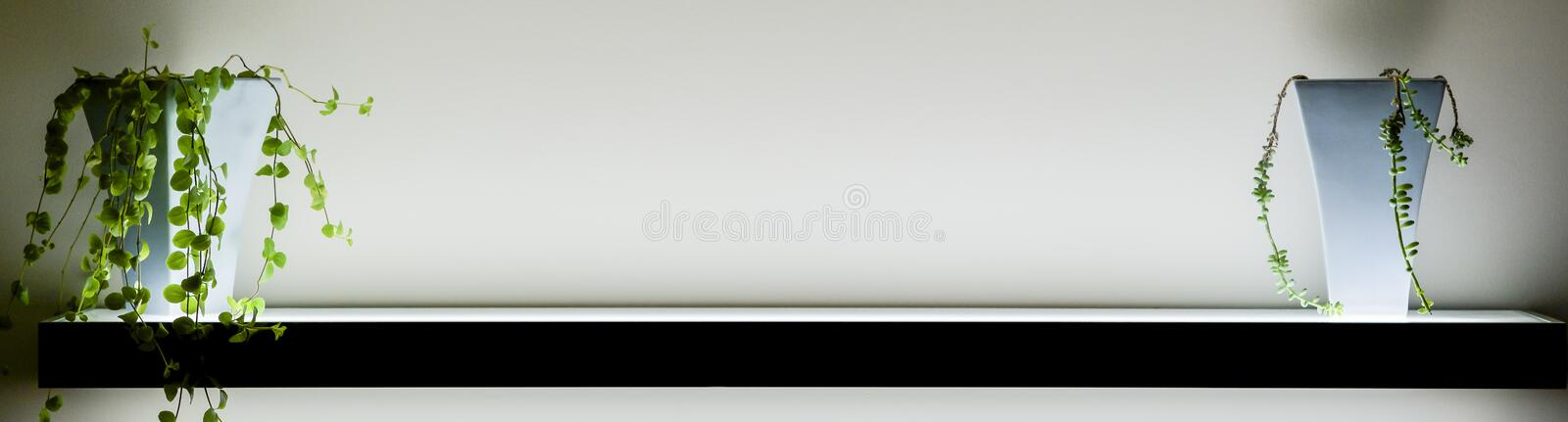 Lighted shelf with two plants and copyspace royalty free stock photography