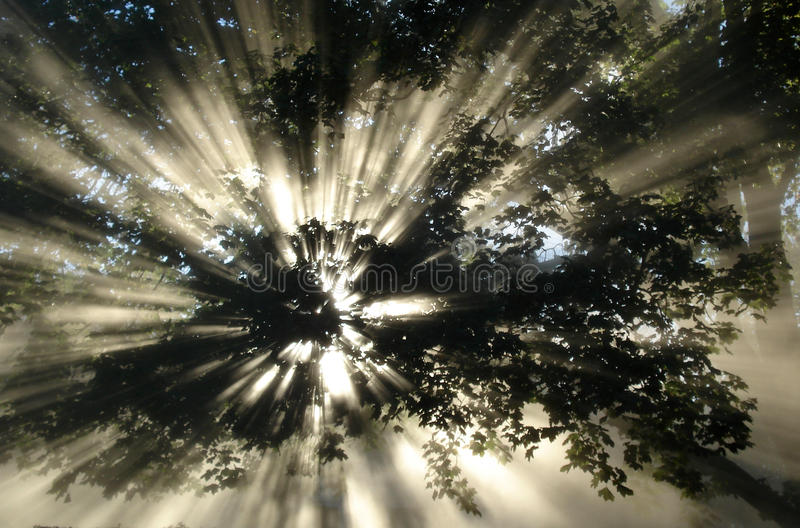 Download The light stock photo. Image of dawn, abstract, light - 16644506
