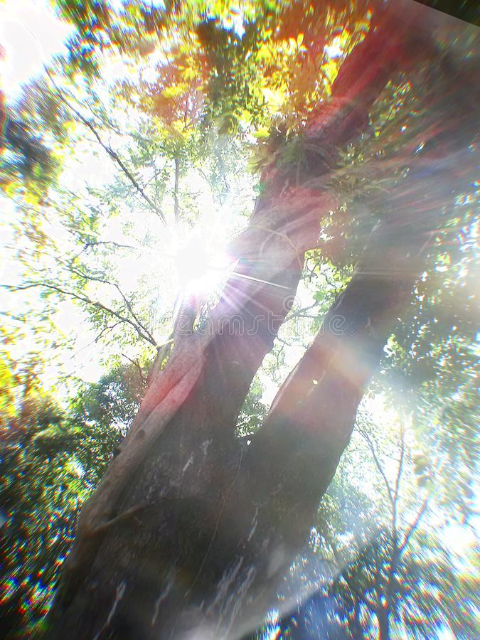 In light all will manifest. In light   manifest. in light  , sun, tree, growing royalty free stock image