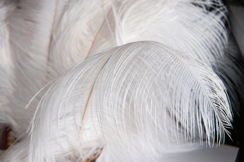 Light as a feather royalty free stock photos